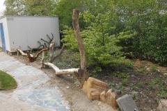 Natuurbelevingstuin-met-bomen